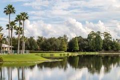 De Bezinning van het palmenmeer Royalty-vrije Stock Afbeelding