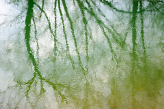 De bezinning van het water van bos Royalty-vrije Stock Foto