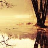 De bezinning van het water van de herfstbomen Stock Foto's