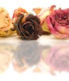 De Bezinningen van de bloem royalty-vrije stock foto