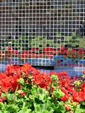 De Bezinningen van de bloem stock fotografie