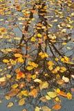 De Bezinningen van de herfst Stock Fotografie