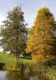 De bezinningen van de herfst royalty-vrije stock afbeelding