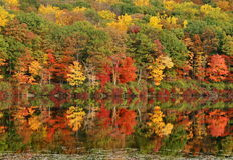 De Bezinningen van de herfst Stock Foto