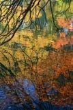 De bezinningen van de herfst in het water Stock Foto