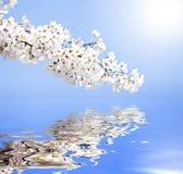 De bezinningen van de lente Stock Foto's