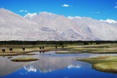 De bezinningen van het water, Nubra Vallei, Ladakh, India Stock Afbeelding