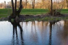 De bezinningen van moerasbomen in een water Royalty-vrije Stock Foto's