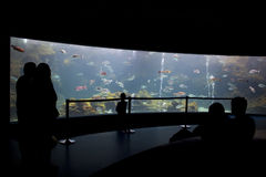 De bezoekers bij het aquarium silhouetteren Royalty-vrije Stock Foto's