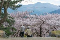 De bezoekers in Iwate parkeren (van de het kasteelplaats van Morioka het park) Royalty-vrije Stock Fotografie