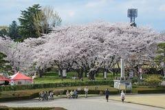 De bezoekers in Kajo-kasteel parkeren (Yamagata-het park van de kasteelplaats) Royalty-vrije Stock Fotografie