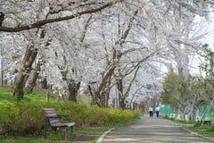 De bezoekers in Kajo-kasteel parkeren (Yamagata-het park van de kasteelplaats) Royalty-vrije Stock Foto's