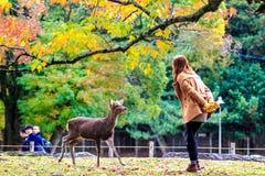 De bezoekers voeden wilde herten in Nara Stock Foto's
