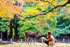 De bezoekers voeden wilde herten in Nara Royalty-vrije Stock Afbeelding