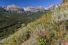 De Bierstadtmorene Wildflowers en Continentaal verdeelt stock fotografie
