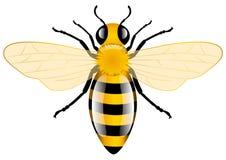 De Bij van de honing stock illustratie