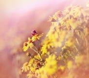 De bij verzamelt stuifmeel en nectar Stock Foto