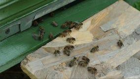 De Bijen dichtbij bijenkorf stock video
