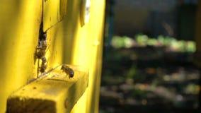 De bijen die binnen en uit bijenkorf bekijken dicht omhoog vliegen stock videobeelden
