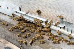 De bijen op bijenkorf bij gat stock afbeeldingen