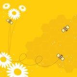 De Bijen van de honing Stock Foto