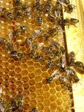 De bijen van de honing Royalty-vrije Stock Afbeelding