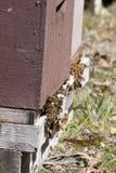 De bijen van de honing in bijenkorf Royalty-vrije Stock Afbeeldingen