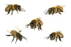 De bijen van de inzameling op wit Stock Afbeelding