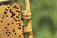 De bijenbijenkorf is geschoten close-up Royalty-vrije Stock Afbeelding