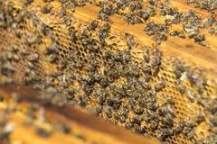 De bijenbijenkorf is geschoten close-up Stock Afbeelding