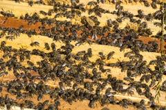 De bijenbijenkorf is geschoten close-up Stock Afbeeldingen