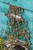 De bijenbijenkorf is geschoten close-up Royalty-vrije Stock Fotografie