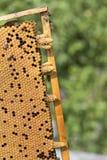 De bijenbijenkorf is geschoten close-up Stock Foto
