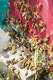 De bijenbijenkorf is geschoten close-up Stock Fotografie