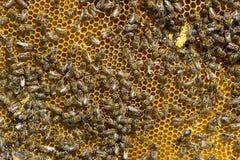 De bijenbijenkorf is geschoten close-up Royalty-vrije Stock Foto's