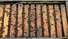 De bijencellen van de honing Royalty-vrije Stock Afbeeldingen