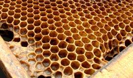 De bijencellen van de honing Royalty-vrije Stock Foto