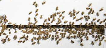 De Bijenkorf van de bij Stock Afbeeldingen