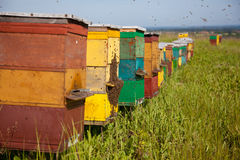 De bijenkorf van de bij Royalty-vrije Stock Foto