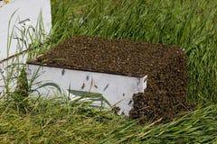 De bijenkorf van de bij Stock Foto's