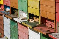 De bijenkorf van de bij Royalty-vrije Stock Foto's