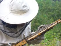 De bijenkorf van de imkerholding stock afbeelding