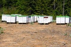 De bijenkorven van de bij Royalty-vrije Stock Fotografie