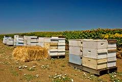 De Bijenkorven van de bij Stock Afbeelding