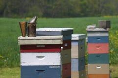 De bijenkorven van de bij Stock Foto's