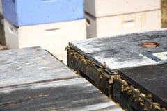 De Bijenkorven van de honingbij stock foto