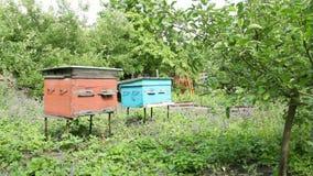 De bijenkorven worden blootgesteld in de tuin stock videobeelden