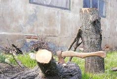 De bijl is geplakt in een boom stock foto's