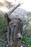 De bijl wordt neergestoken in de stomp stock afbeelding