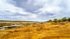 De bijna droge Olifant-Rivier in het Nationale Park van Kruger in Zuid-Afrika stock afbeelding